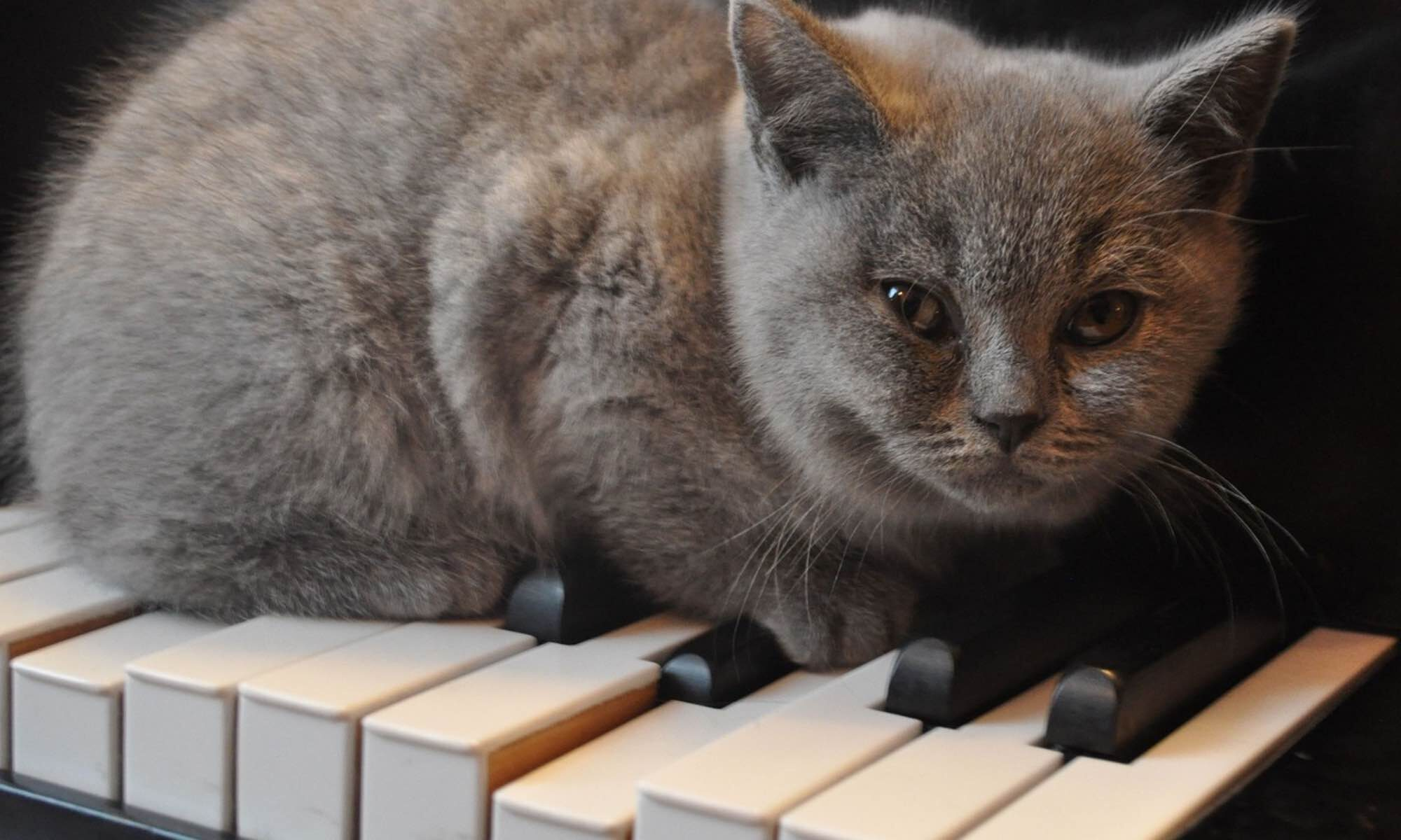 Pianostemmer Leon Rombouts
